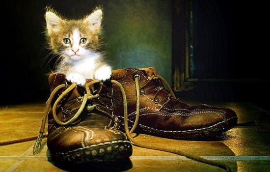 До чого сняться черевики: що кажуть сонники Міллера, Ванги, Хассе та інші. Тлумачення снів про черевиках: нових, старих, чоловічих, жіночих