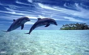 До чого сняться дельфіни по сонникам Міллера, Фрейда, Ванги
