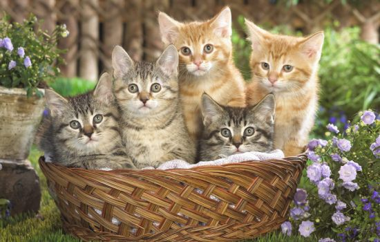 До чого сняться кошенята: тлумачення сну, в якому маленькі кошенята